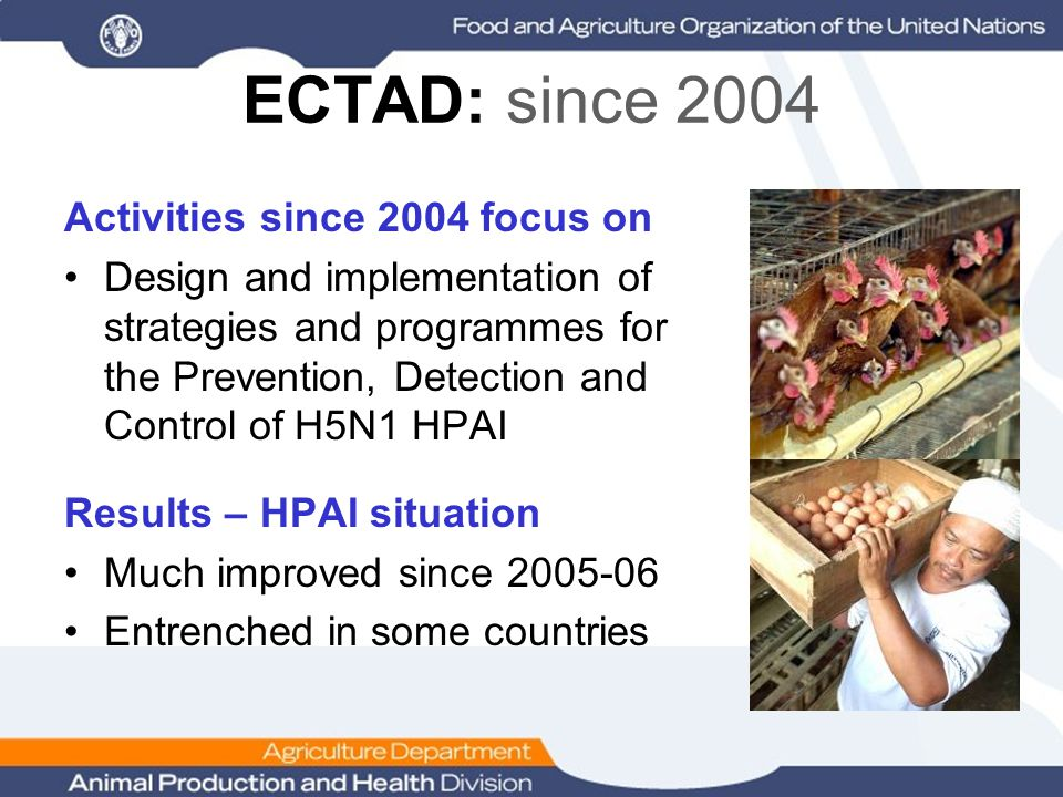 ECTAD: since 2004 Activities since 2004 focus on Design and implementation of strategies and programmes for the Prevention, Detection and Control of H