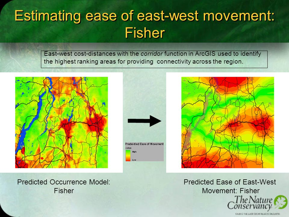 Estimating ease of east-west movement: Fisher Results of east-west connectivity analysis for fishers with a high assigned cost of crossing water bodies.