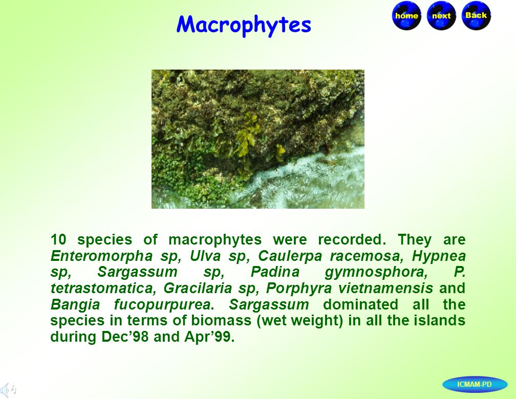 ICMAM-PD 10 species of macrophytes were recorded. They are Enteromorpha sp, Ulva sp, Caulerpa racemosa, Hypnea sp, Sargassum sp, Padina gymnosphora, P