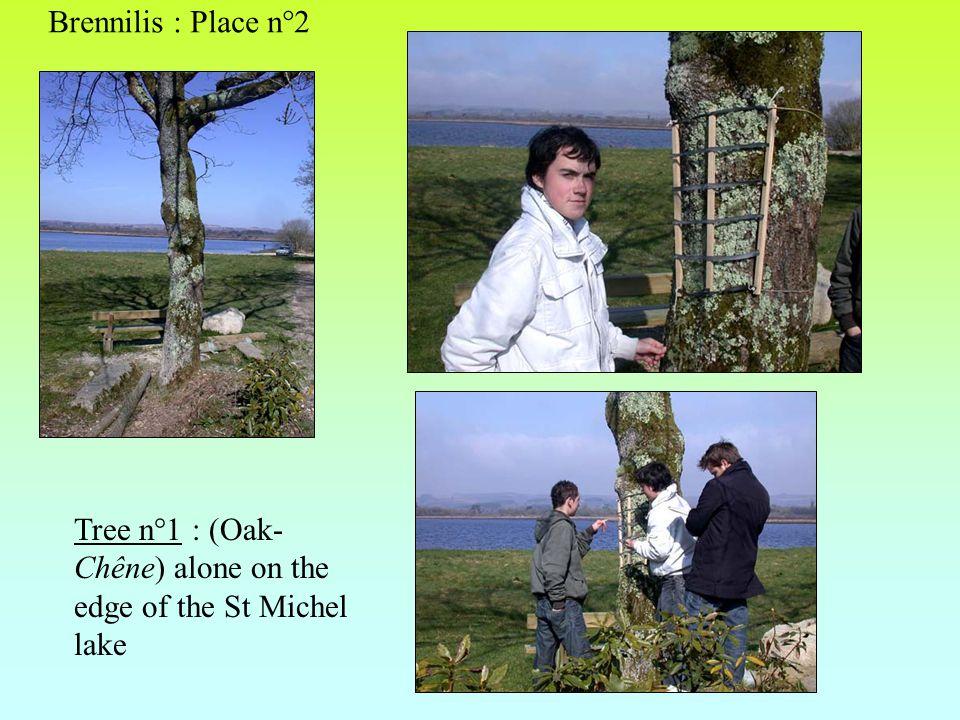 Tree n°1 : (Oak- Chêne) alone on the edge of the St Michel lake Brennilis : Place n°2