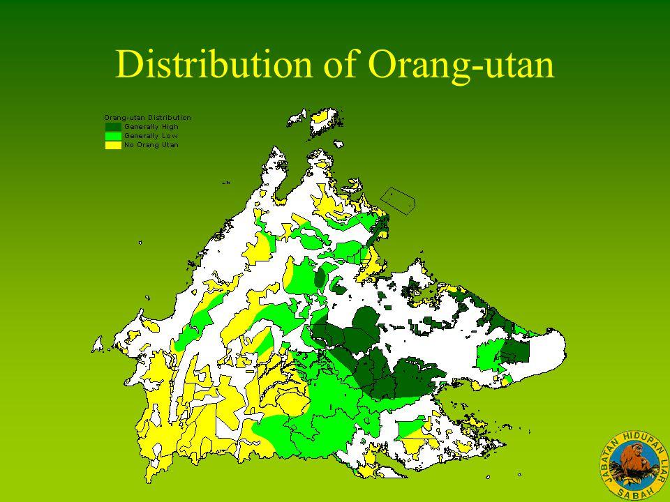 Distribution of Orang-utan