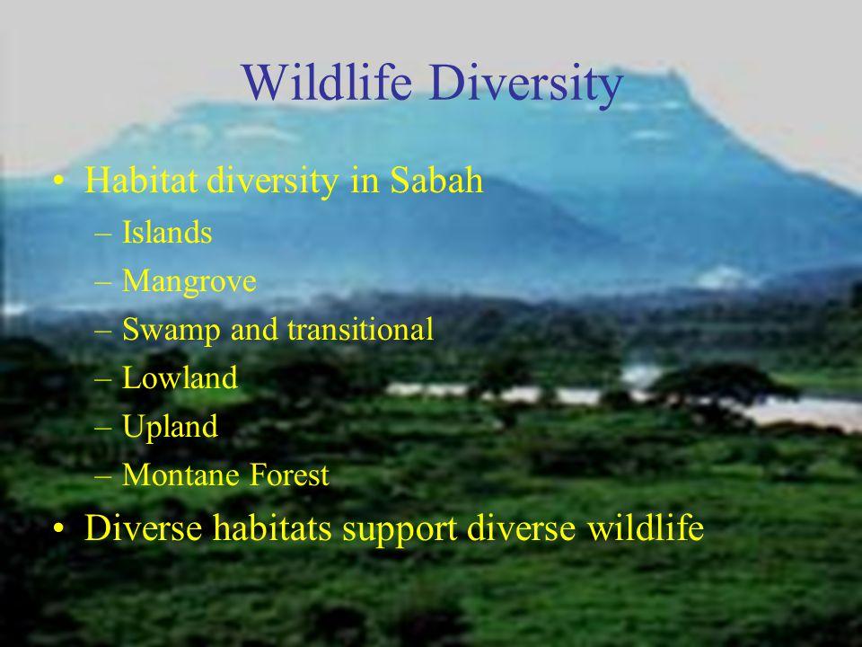 Wildlife Diversity Habitat diversity in Sabah –Islands –Mangrove –Swamp and transitional –Lowland –Upland –Montane Forest Diverse habitats support diverse wildlife