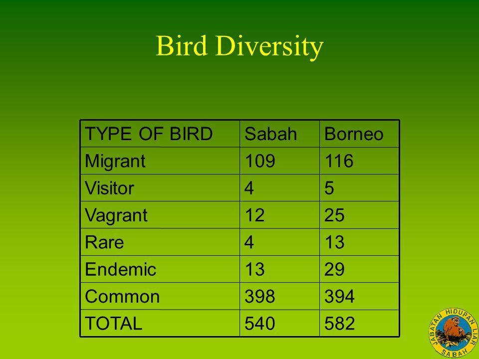 582 394 29 13 25 5 116 Borneo 540TOTAL 398Common 13Endemic 4Rare 12Vagrant 4Visitor 109Migrant SabahTYPE OF BIRD Bird Diversity