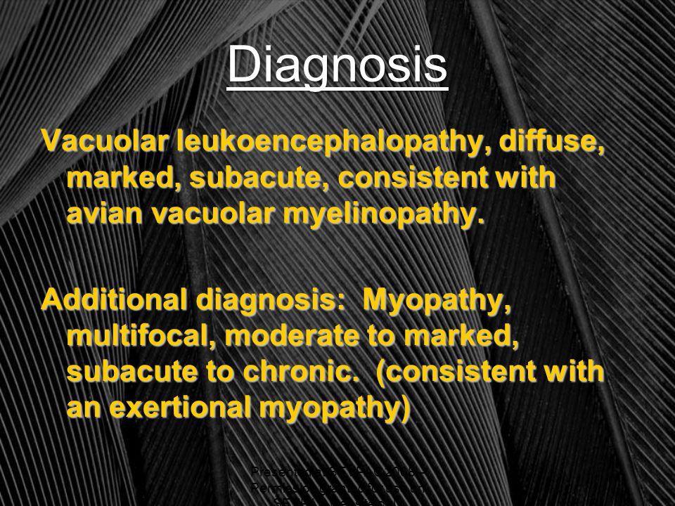 Diagnosis Vacuolar leukoencephalopathy, diffuse, marked, subacute, consistent with avian vacuolar myelinopathy.