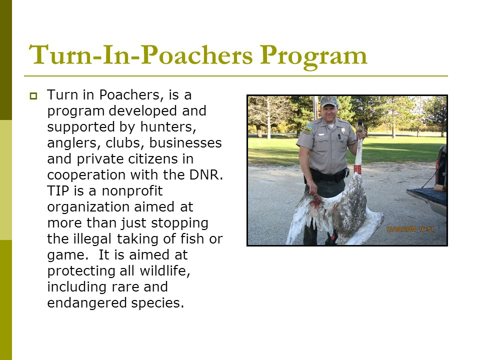 Turn-In-Poachers Program  Turn in Poachers, is a program developed and supported by hunters, anglers, clubs, businesses and private citizens in cooperation with the DNR.
