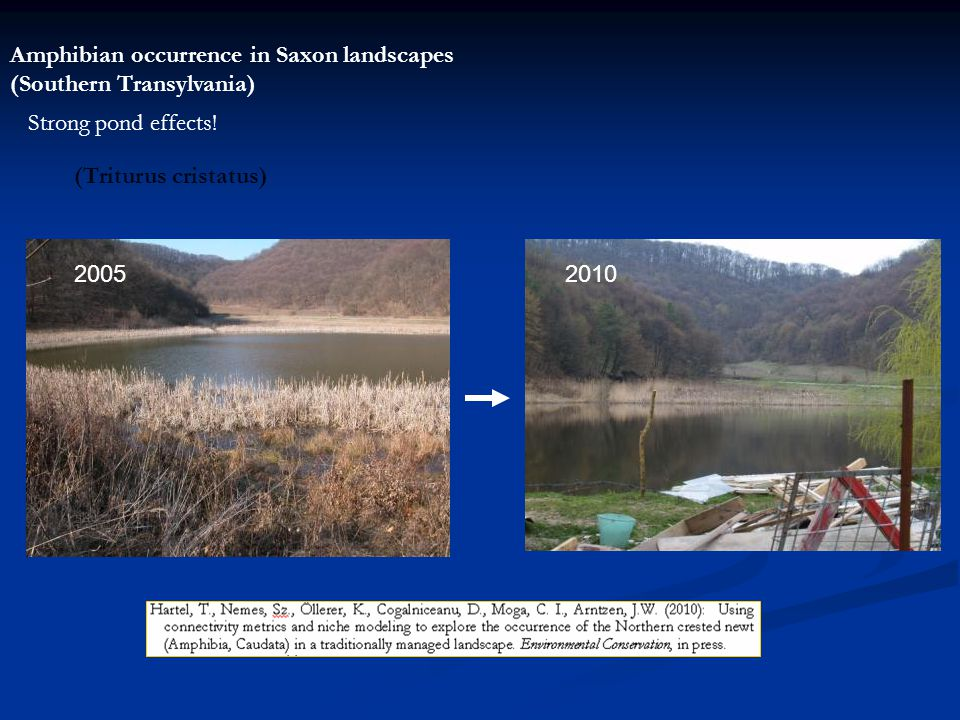 Amphibian occurrence in Saxon landscapes (Southern Transylvania) Strong pond effects.