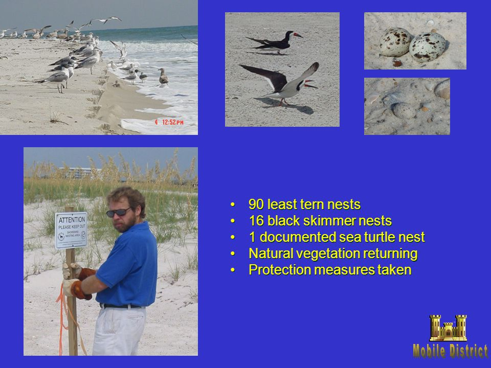 90 least tern nests 16 black skimmer nests 1 documented sea turtle nest Natural vegetation returning Protection measures taken 90 least tern nests 16