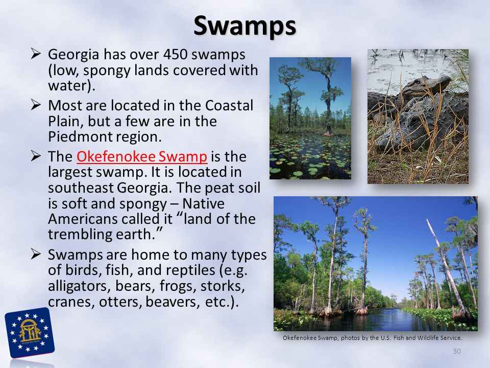 Georgia has over 450 swamps (low, spongy lands covered with water).  Most are located in the Coastal Plain, but a few are in the Piedmont region. 