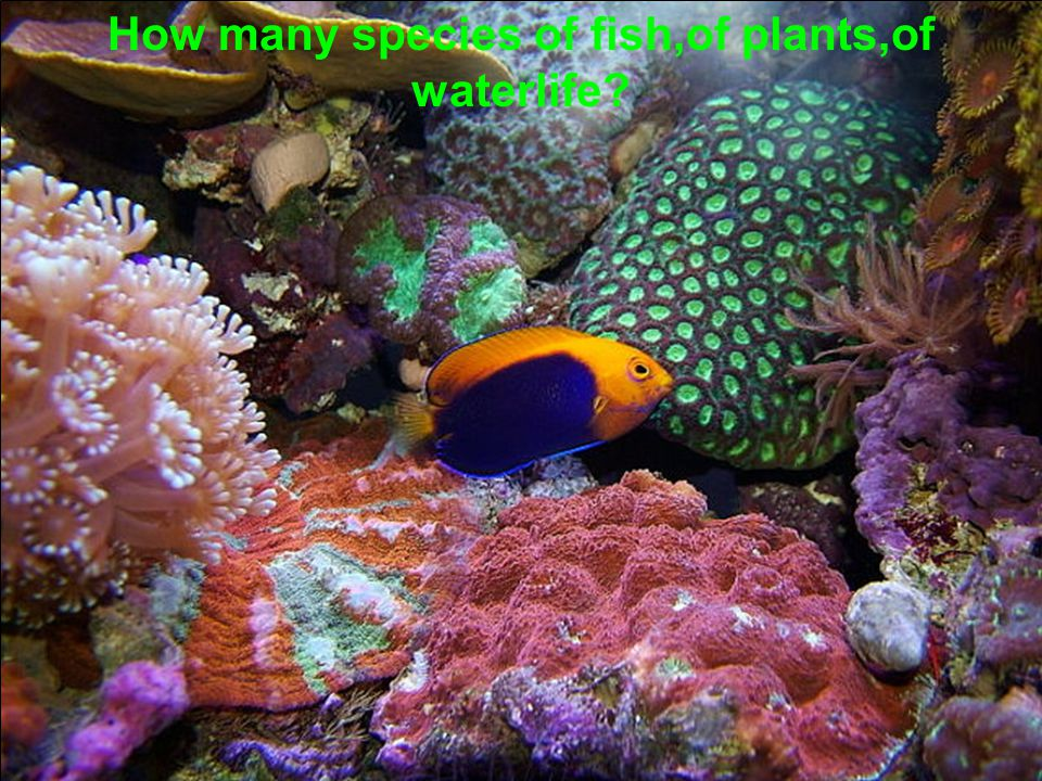 How many species of fish,of plants,of waterlife