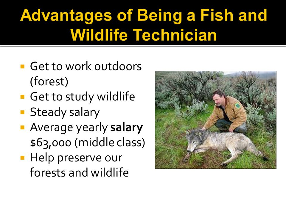  Get to work outdoors (forest)  Get to study wildlife  Steady salary  Average yearly salary $63,000 (middle class)  Help preserve our forests and wildlife
