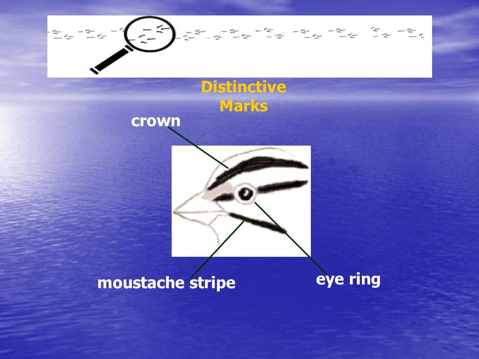 crown eye ring moustache stripe Distinctive Marks