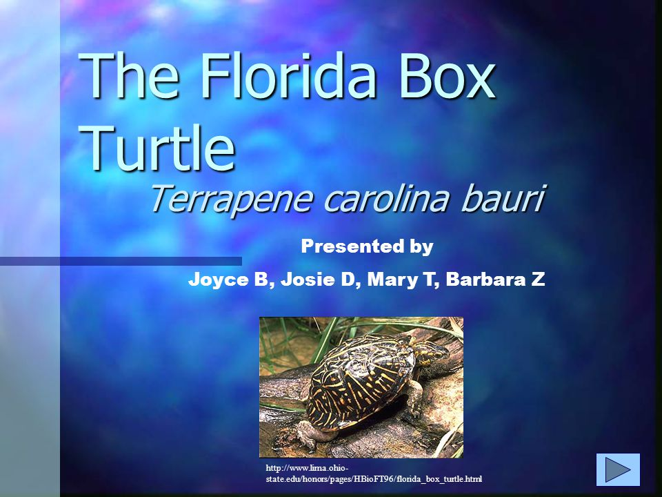 The Florida Box Turtle Terrapene carolina bauri Presented by Joyce B, Josie D, Mary T, Barbara Z http://www.lima.ohio- state.edu/honors/pages/HBioFT96/florida_box_turtle.html