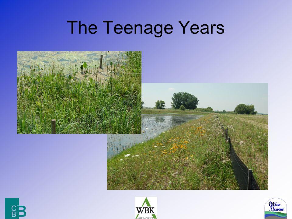 14 The Teenage Years