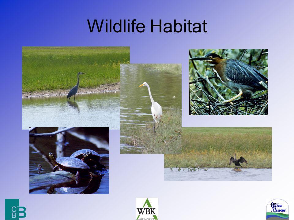 16 Wildlife Habitat