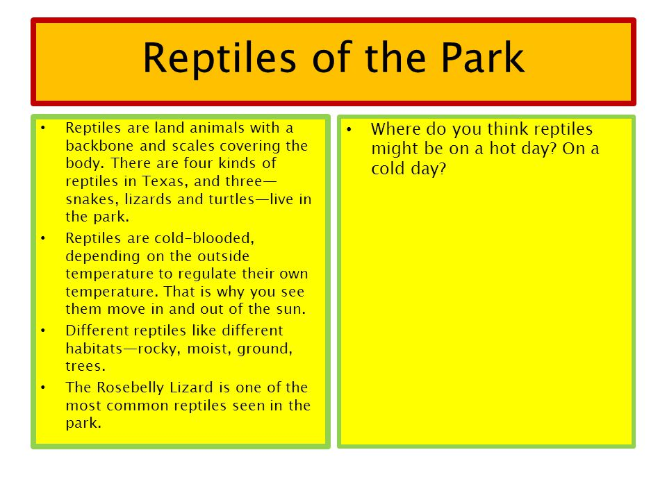 Reptiles of the Park Reptiles are land animals with a backbone and scales covering the body.