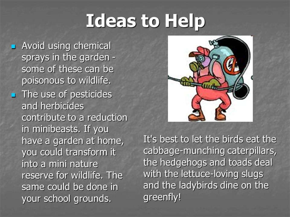 Ideas to Help Avoid using chemical sprays in the garden - some of these can be poisonous to wildlife.