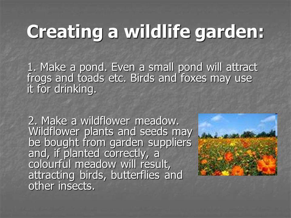 Creating a wildlife garden: 2. Make a wildflower meadow.
