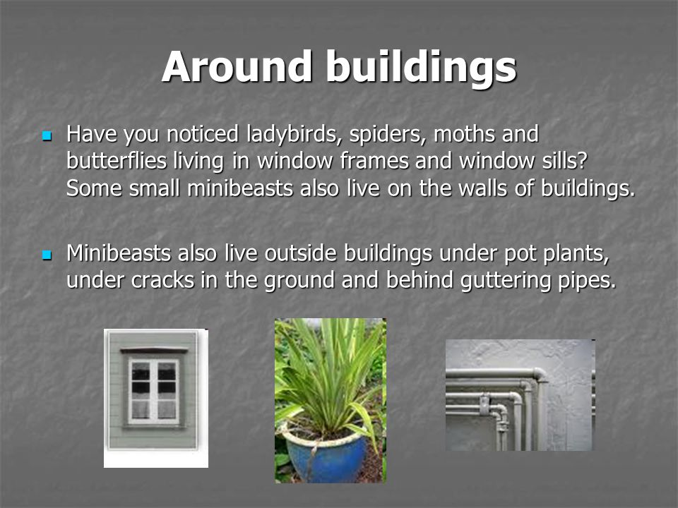 Around buildings Have you noticed ladybirds, spiders, moths and butterflies living in window frames and window sills.
