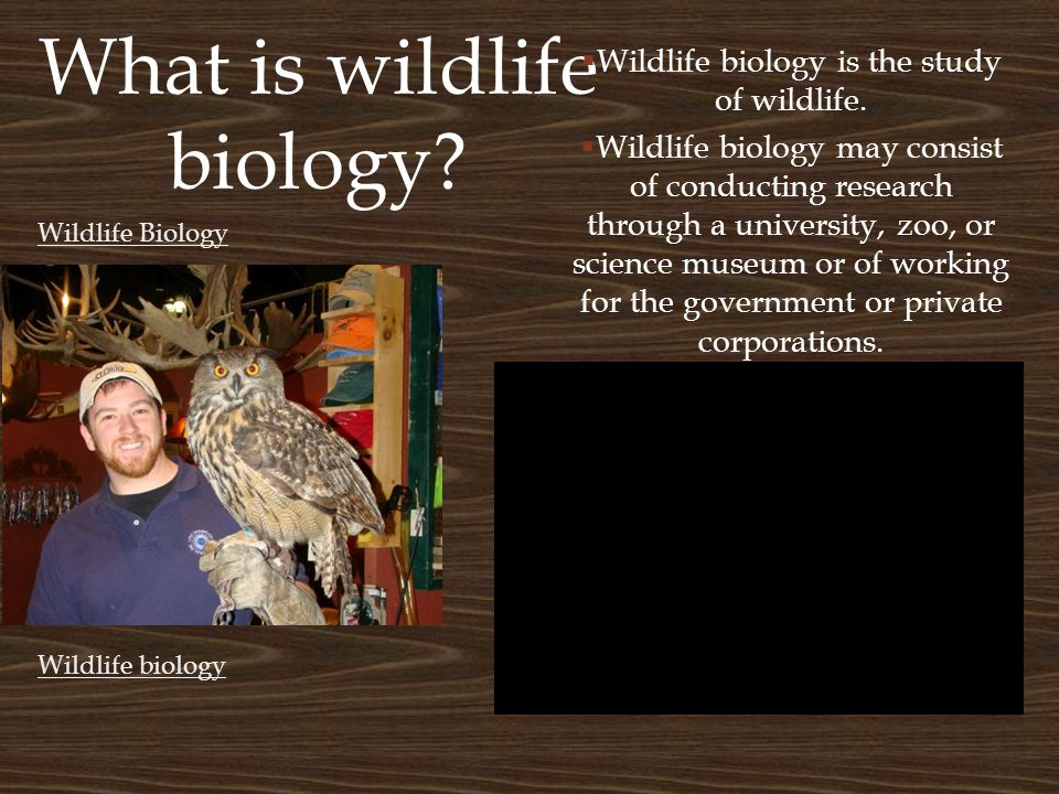 What is wildlife biology.  Wildlife biology is the study of wildlife.