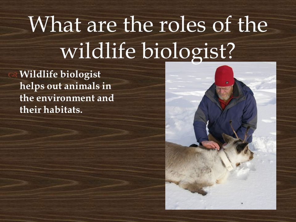 The importance of wildlife biology  Wildlife Biologist have many reasons why wildlife Biology is important.