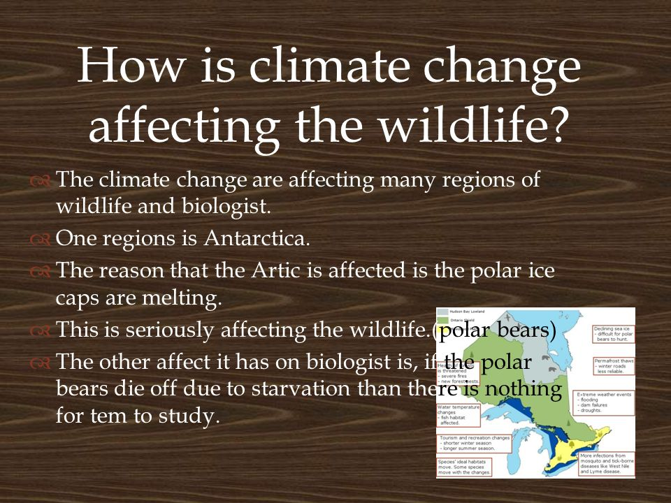 How is climate change affecting the wildlife.
