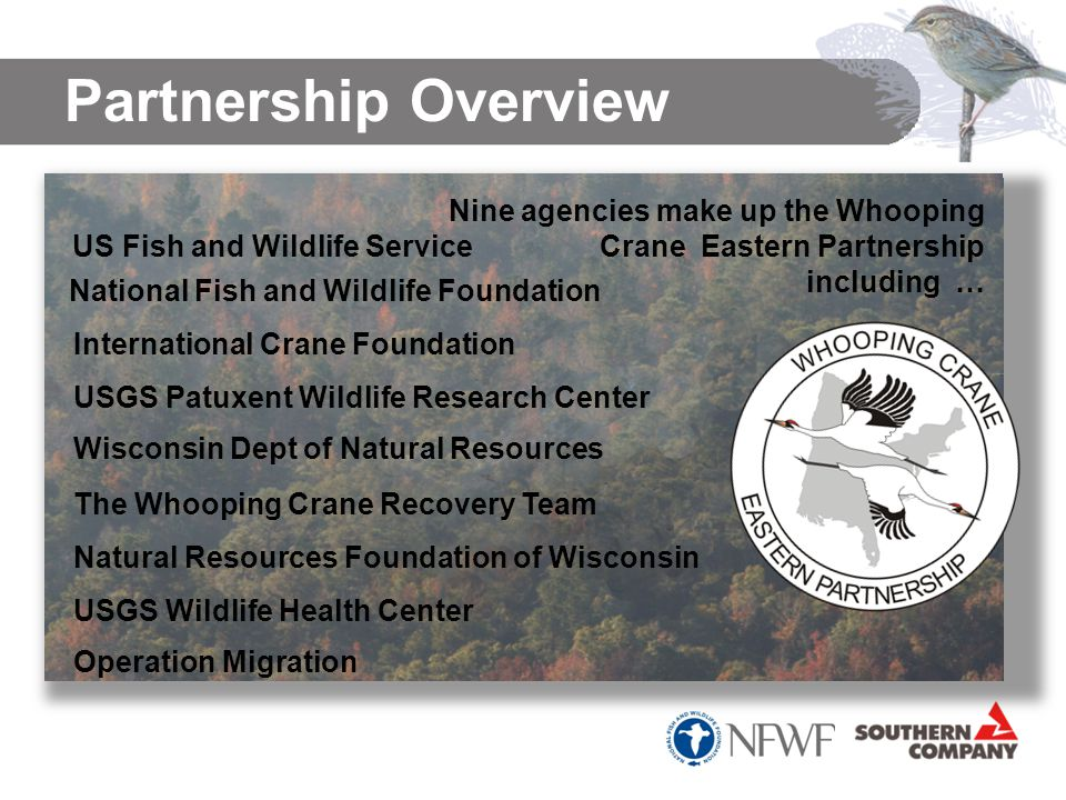 Partnership Overview S ince 2001, Operation Migration has led 13 generations of Whooping cranes on their first migration from Wisconsin to Florida The National Fish and Wildlife Foundation has supported this work since the beginning and is a founding member of the Whooping Crane Eastern Partnership Nine agencies make up the Whooping Crane Eastern Partnership including … US Fish and Wildlife Service International Crane Foundation USGS Patuxent Wildlife Research Center Wisconsin Dept of Natural Resources National Fish and Wildlife Foundation The Whooping Crane Recovery Team Natural Resources Foundation of Wisconsin USGS Wildlife Health Center Operation Migration