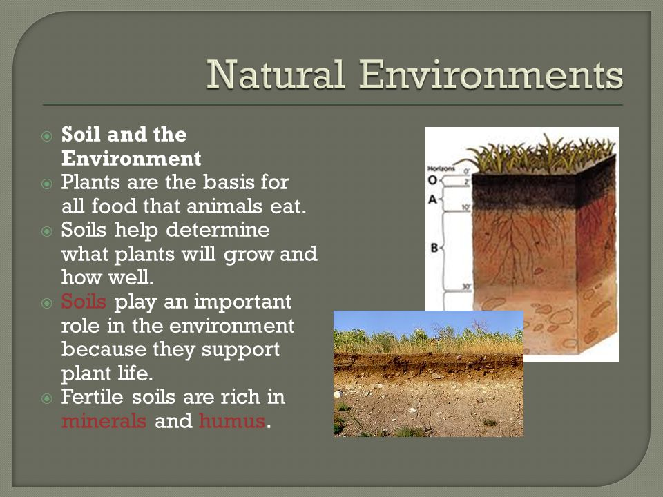 Soil and the Environment  Plants are the basis for all food that animals eat.