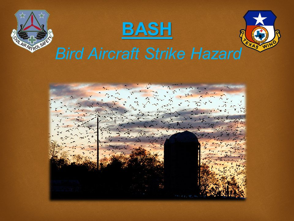 Bird Aircraft Strike Hazard Team Promote the reporting of bird and other wildlife strikes to the appropriate national authority.