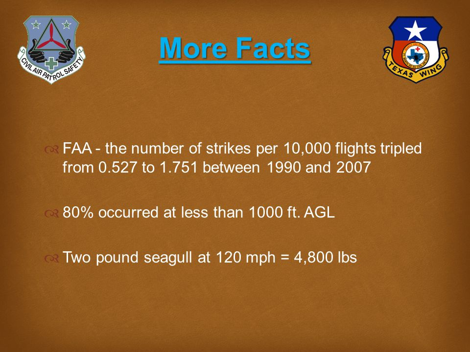 Avoiding Bird Strikes  Avoid low altitude flight as much as possible to reduce the risk of a strike.