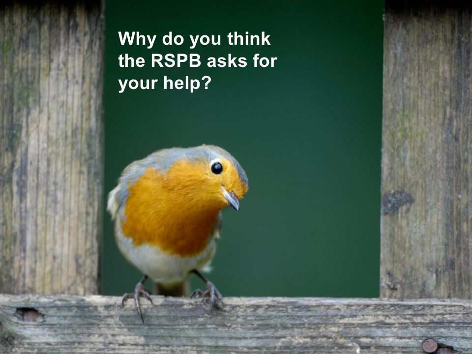 Every year the RSPB asks children across the UK to count the birds in their school grounds