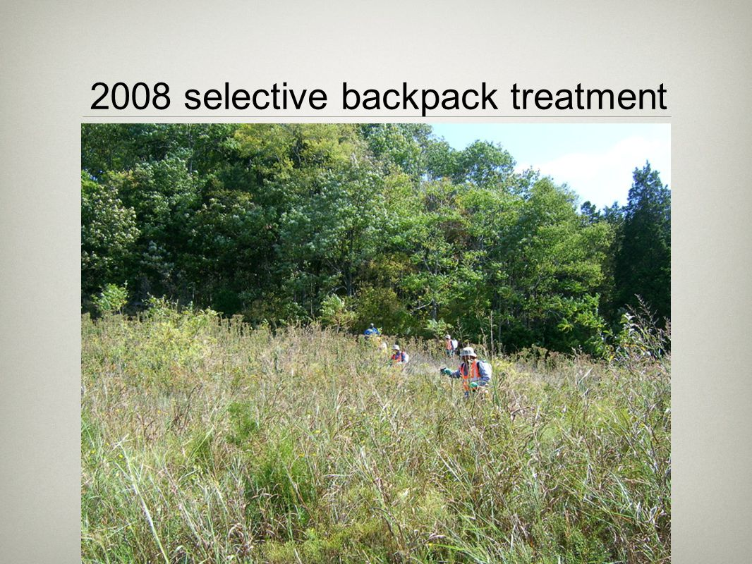 2008 selective backpack treatment of all missed brush