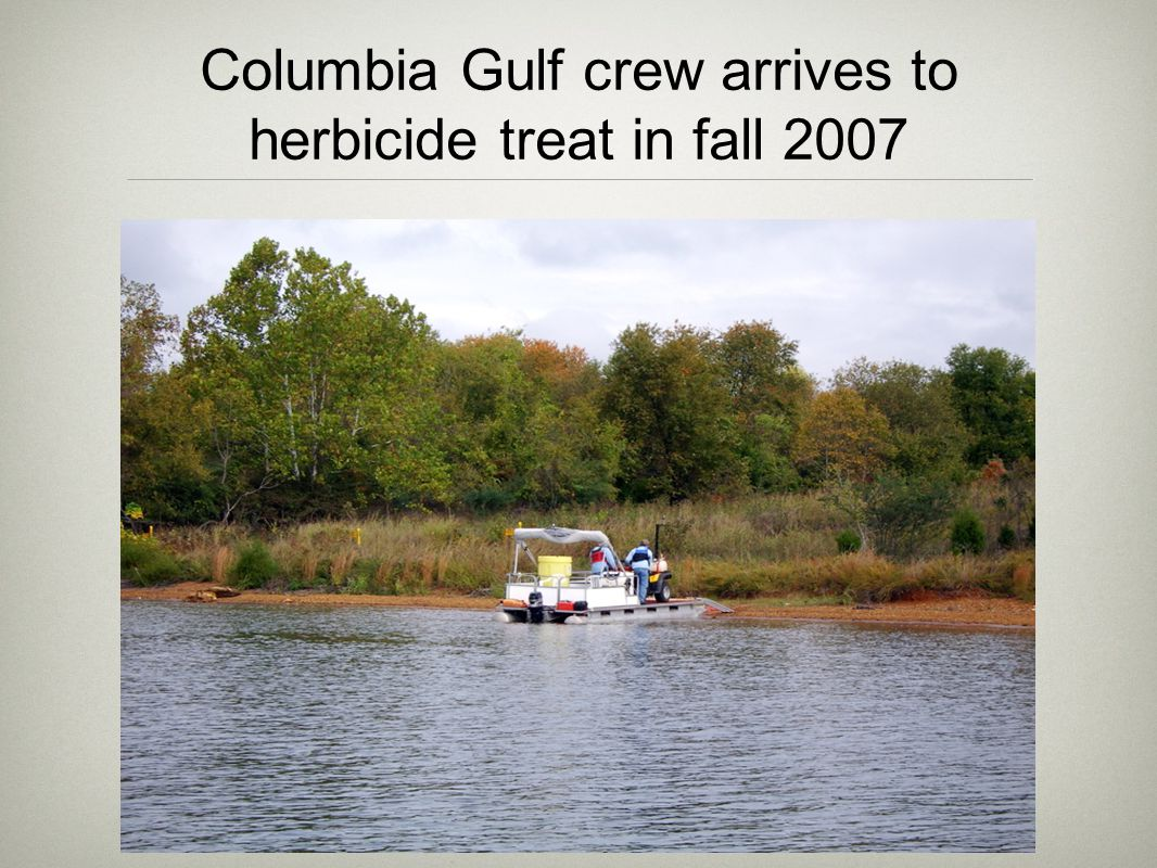 Columbia Gulf crew arrives to herbicide treat in fall 2007