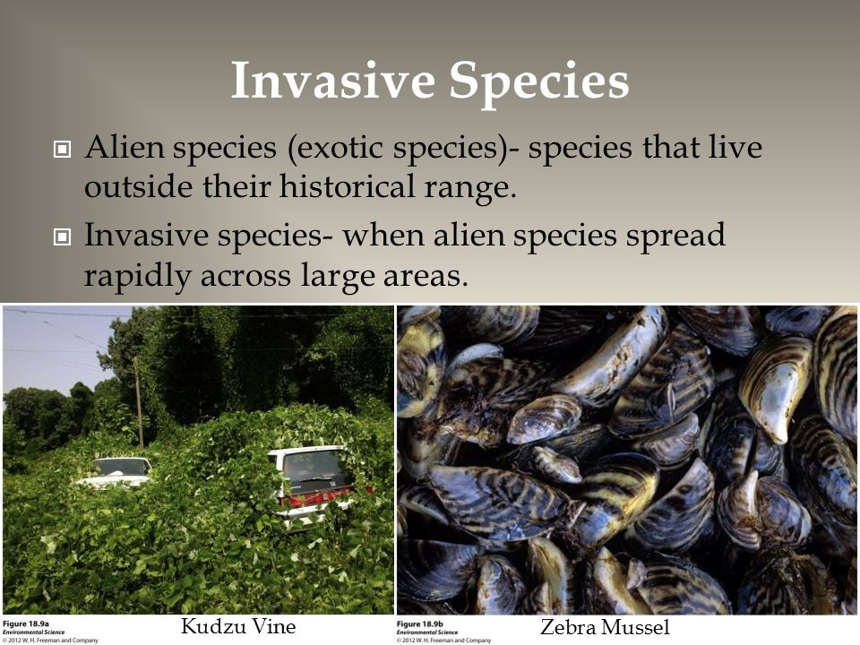 Invasive Species Alien species (exotic species)- species that live outside their historical range.