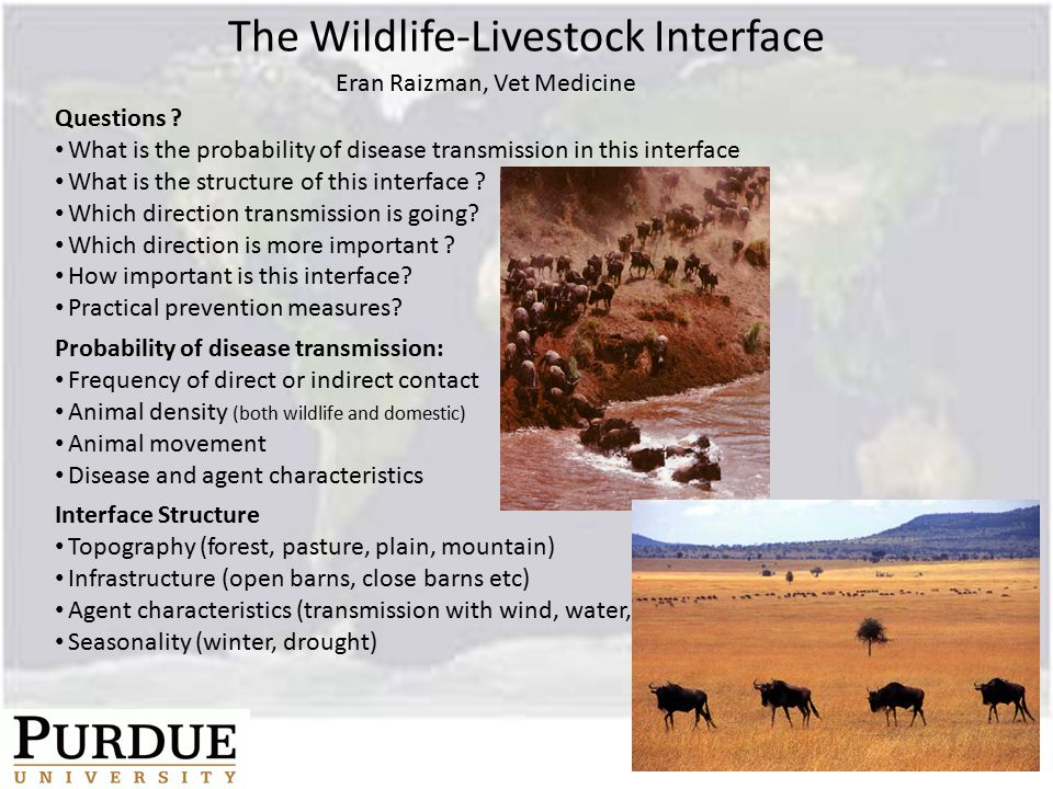 The Wildlife-Livestock Interface Questions .