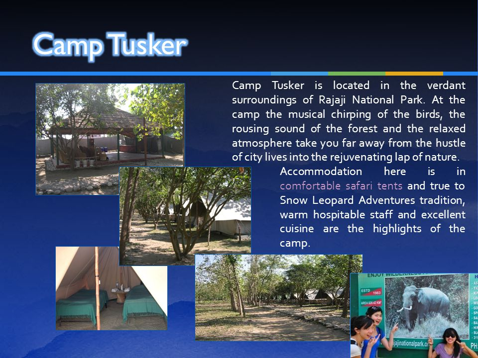 Camp Tusker is located in the verdant surroundings of Rajaji National Park. At the camp the musical chirping of the birds, the rousing sound of the fo
