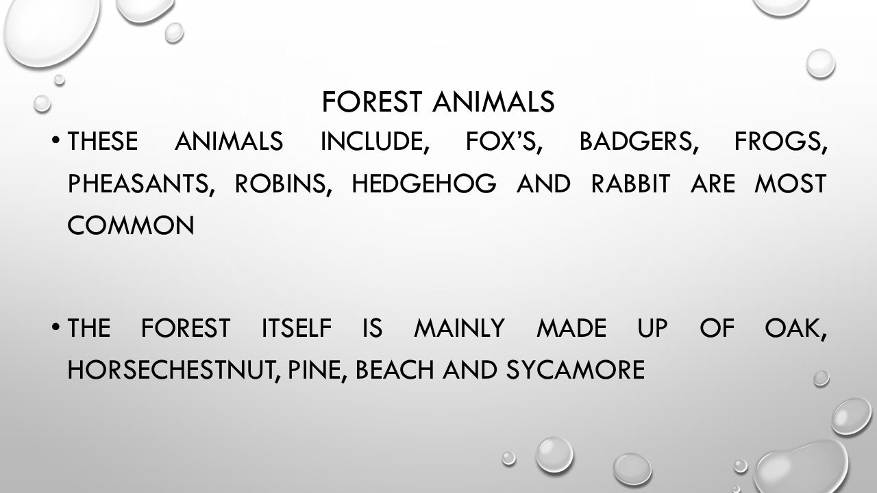 FOREST ANIMALS THESE ANIMALS INCLUDE, FOX'S, BADGERS, FROGS, PHEASANTS, ROBINS, HEDGEHOG AND RABBIT ARE MOST COMMON THE FOREST ITSELF IS MAINLY MADE U
