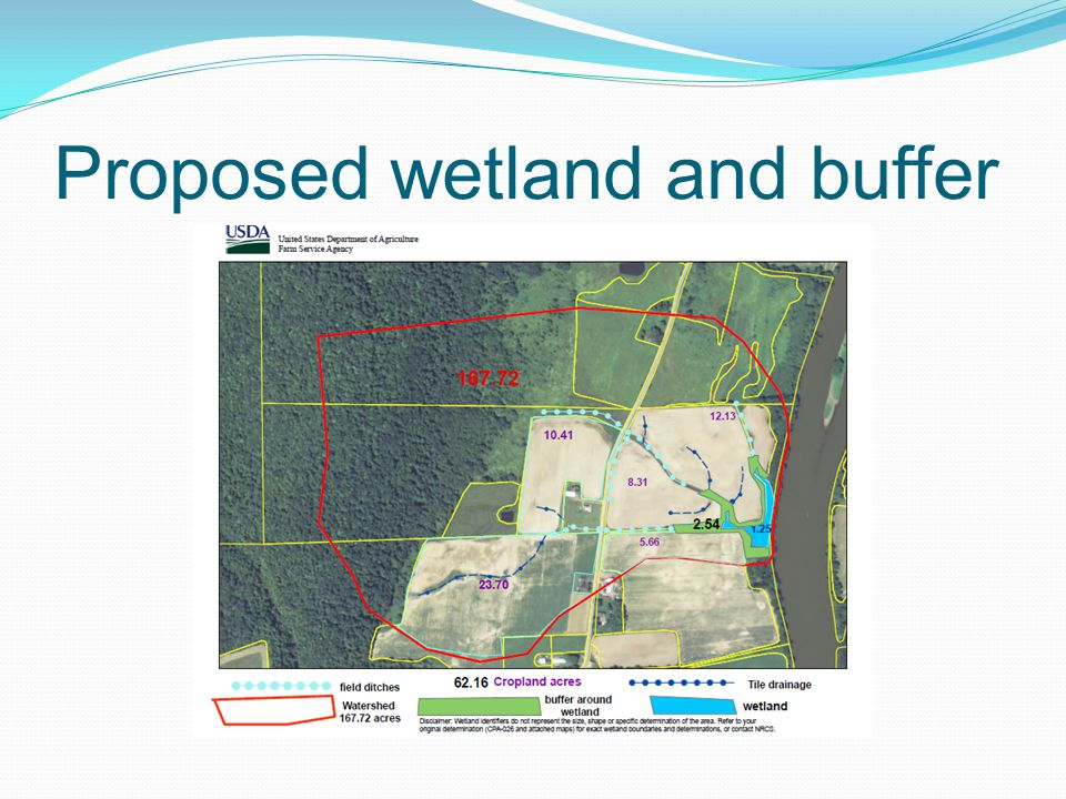Proposed wetland and buffer