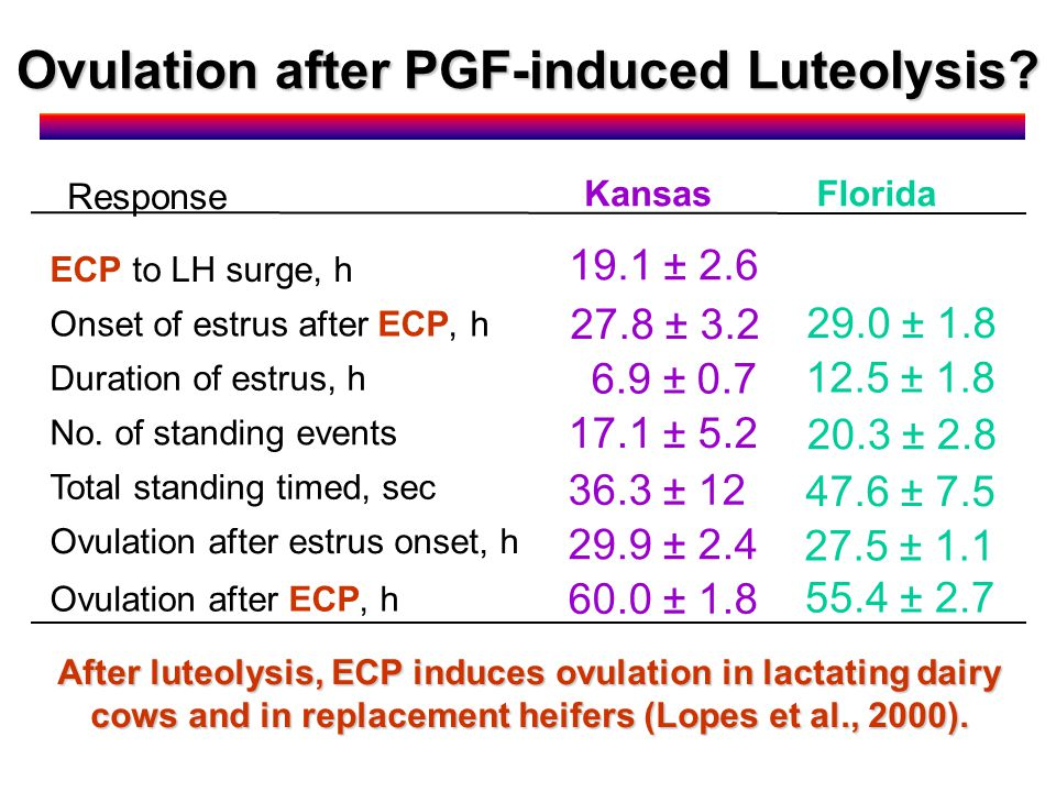 After luteolysis, ECP induces ovulation in lactating dairy cows and in replacement heifers (Lopes et al., 2000).