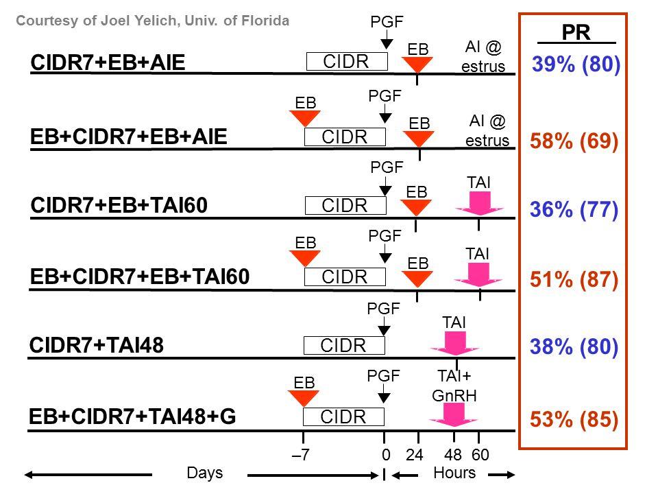 PGF EB –70 24 60 Days Hours CIDR EB+CIDR7+EB+AIE PGF CIDR CIDR7+EB+AIE EB AI @ estrus EB AI @ estrus PGF EB CIDR EB+CIDR7+EB+TAI60 PGF CIDR CIDR7+EB+TAI60 EB TAI PGF EB CIDR EB+CIDR7+TAI48+G CIDR CIDR7+TAI48 TAI TAI+ GnRH 48 39% (80) 58% (69) 36% (77) 51% (87) 38% (80) 53% (85) PGF PR Courtesy of Joel Yelich, Univ.