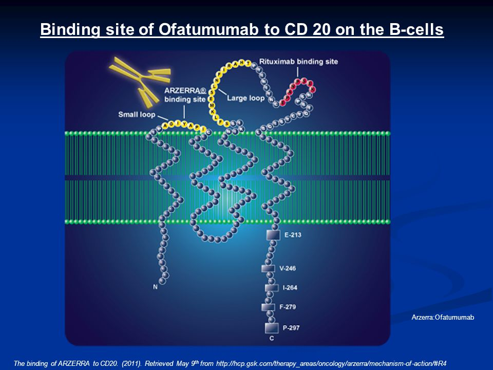 The binding of ARZERRA to CD20. (2011). Retrieved May 9 th from http://hcp.gsk.com/therapy_areas/oncology/arzerra/mechanism-of-action/#R4 Arzerra:Ofat
