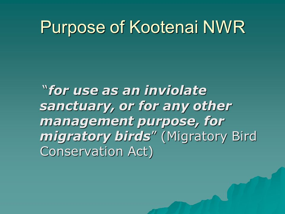 Purpose of Kootenai NWR for use as an inviolate sanctuary, or for any other management purpose, for migratory birds (Migratory Bird Conservation Act)
