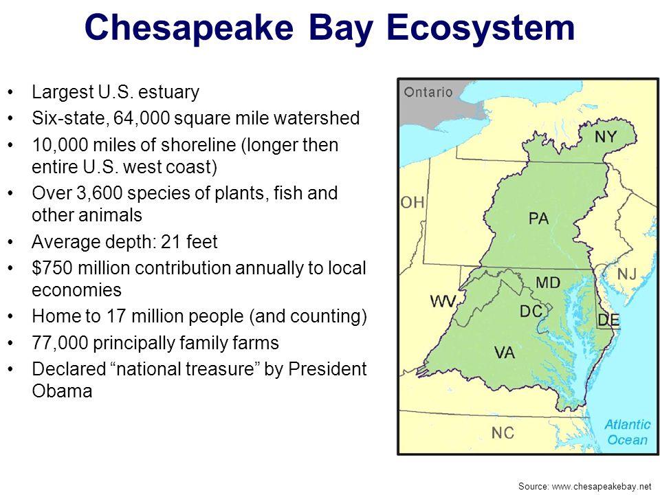 Chesapeake Bay Ecosystem Largest U.S. estuary Six-state, 64,000 square mile watershed 10,000 miles of shoreline (longer then entire U.S. west coast) O