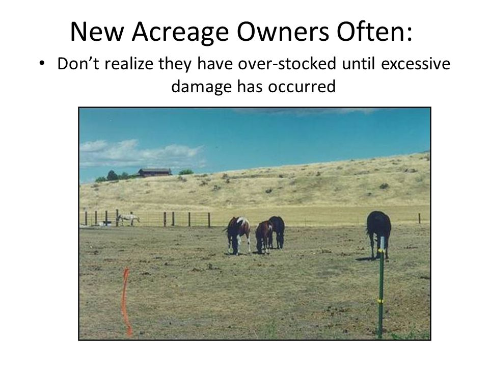 New Acreage Owners Often: Don't realize they have over-stocked until excessive damage has occurred