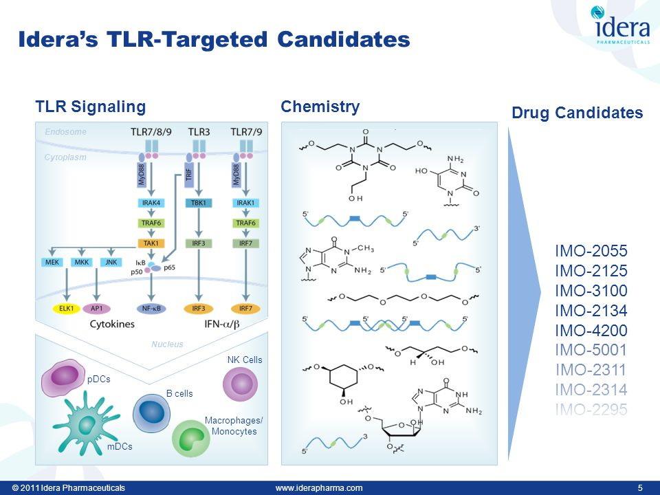 © 2011 Idera Pharmaceuticalswww.iderapharma.com 5 Idera's TLR-Targeted Candidates Chemistry Drug Candidates IMO-2055 IMO-2125 IMO-3100 IMO-2134 IMO-4200 IMO-5001 IMO-2311 IMO-2314 IMO-2295 mDCs pDCs B cells Macrophages/ Monocytes NK Cells TLR Signaling Endosome Cytoplasm Nucleus