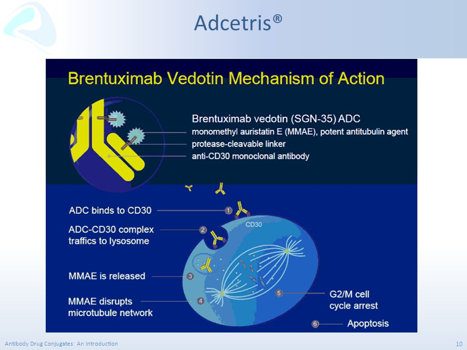 Antibody Drug Conjugates: An Introduction 10 Adcetris®