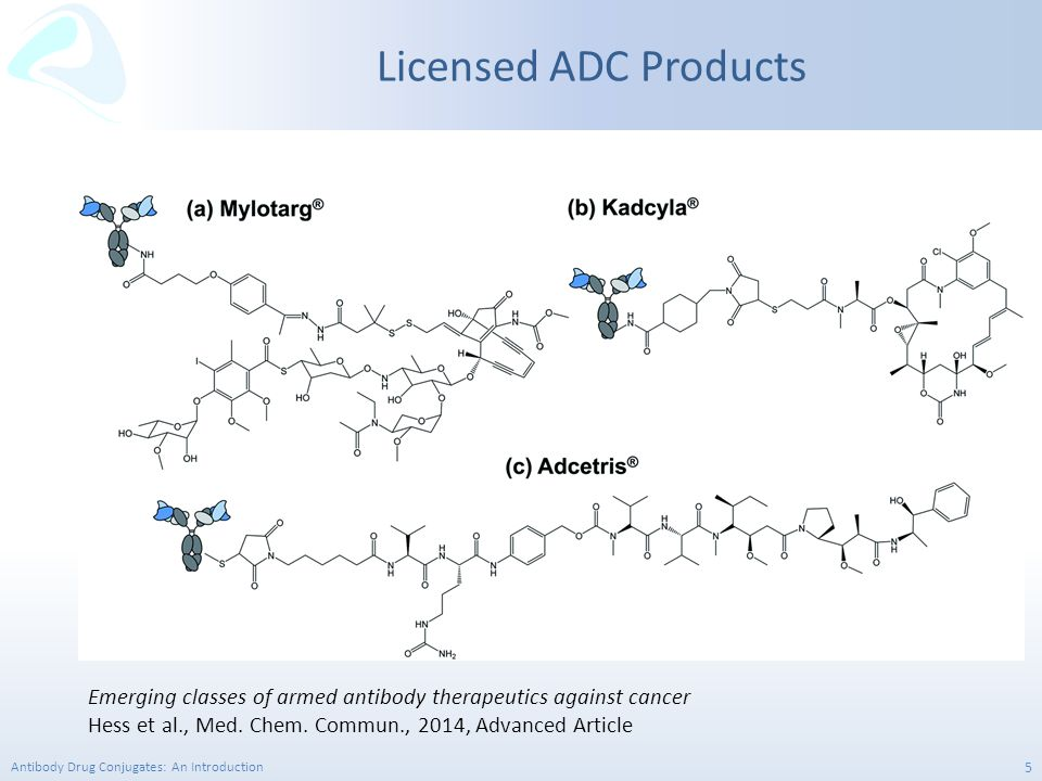 Antibody Drug Conjugates: An Introduction 16 Cleavable Linkers Lysosomal protease sensitive linkers – This strategy uses lysosomal proteases such as Cathepsin B that recognise and cleave a dipeptide bond to release the free drug from the antibody.