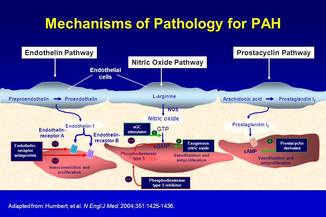 Mechanisms of Pathology for PAH Adapted from: Humbert, et al.