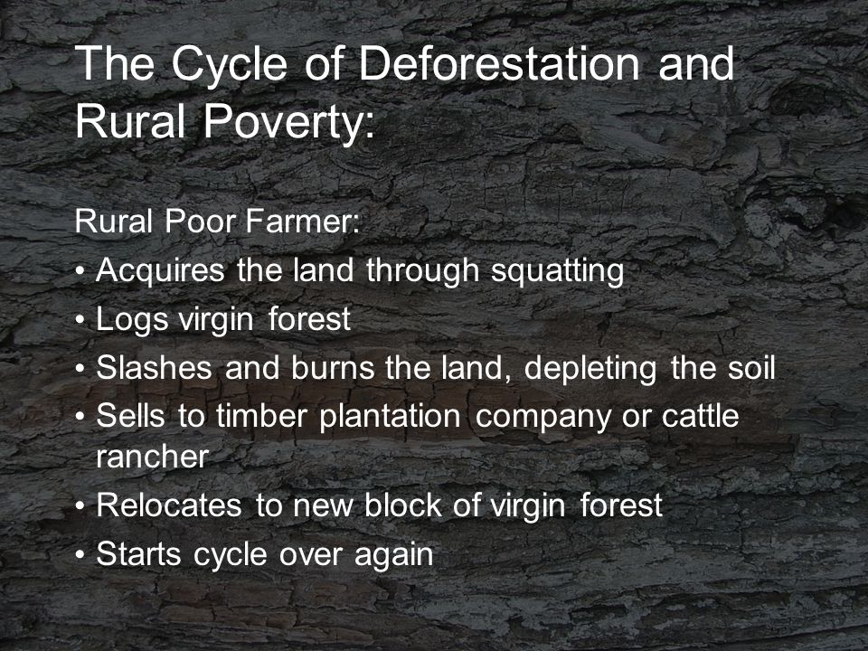 The Cycle of Deforestation and Rural Poverty: Rural Poor Farmer: Acquires the land through squatting Logs virgin forest Slashes and burns the land, depleting the soil Sells to timber plantation company or cattle rancher Relocates to new block of virgin forest Starts cycle over again