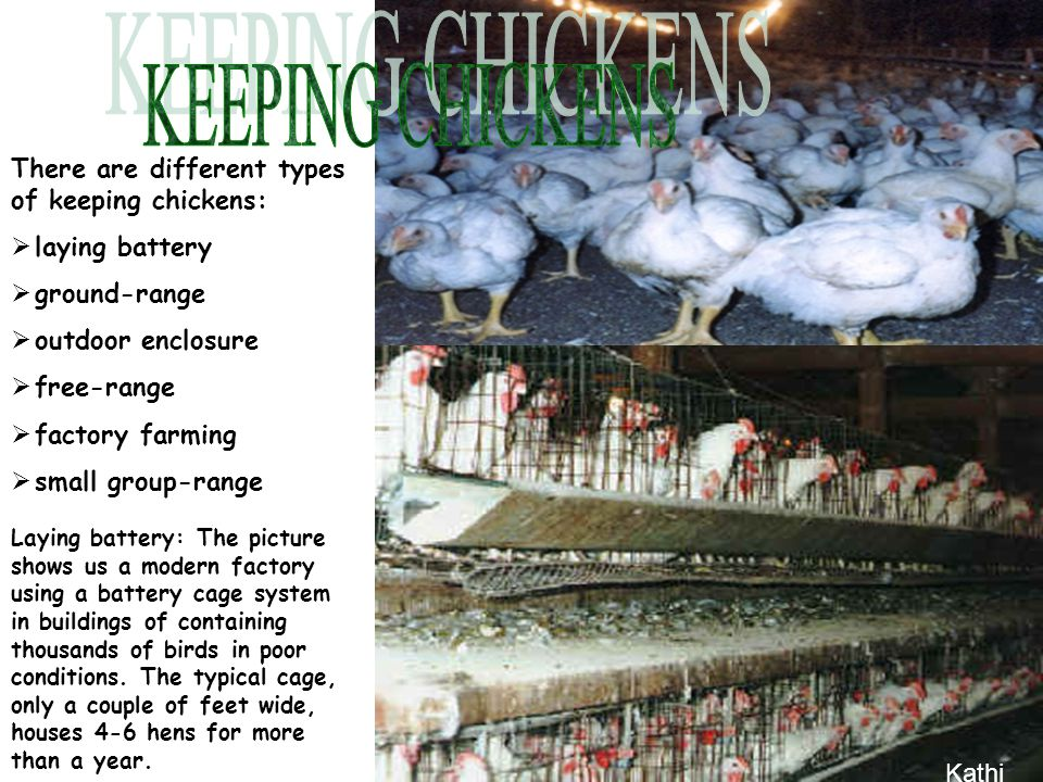 There are different types of keeping chickens:  laying battery  ground-range  outdoor enclosure  free-range actory farming  small group-range Laying battery: The picture shows us a modern factory using a battery cage system in buildings of containing thousands of birds in poor conditions.