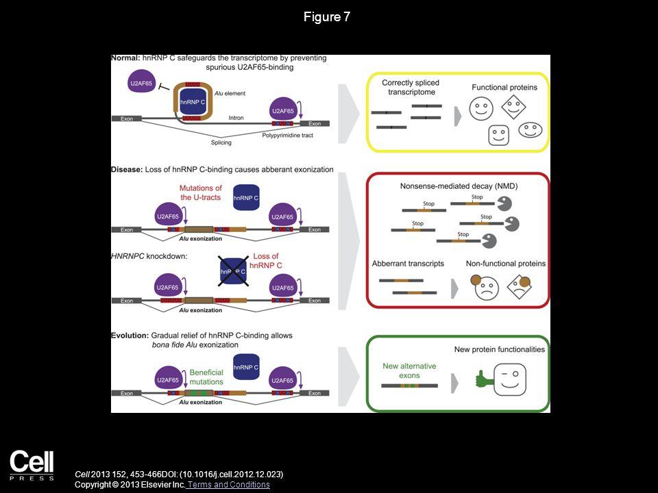 Figure 7 Cell 2013 152, 453-466DOI: (10.1016/j.cell.2012.12.023) Copyright © 2013 Elsevier Inc.